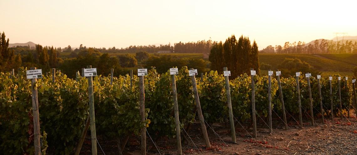 Casa Silva | Chilean Wine | Vine Connections